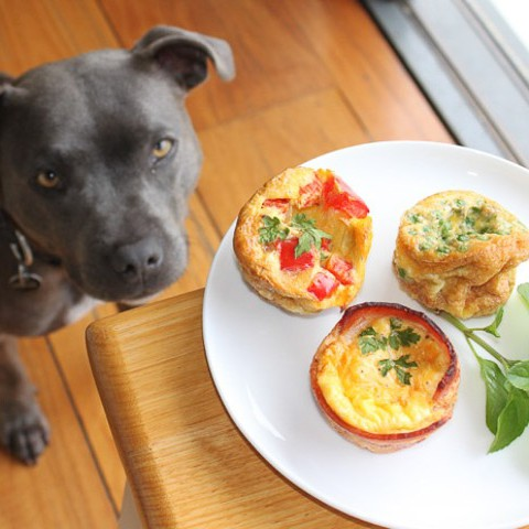 Egg Muffins and Admirer